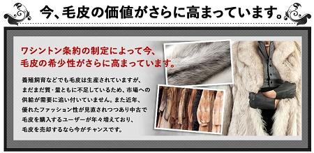毛皮の売るタイミングは今です!